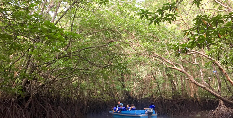 Mangrove or Fireflies Tour with Seafood Meals