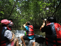 The Canopi Resort - Mangrove Tour